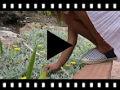 Video from Espadrillas a righe bicolore per bambini e adulti