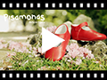 Video from Scarpe/Scarpine Bambina Neonata Pelle Fibbia
