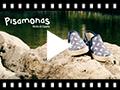 Video from Sneakers Tela Stampata con Elastici Suola in Corda